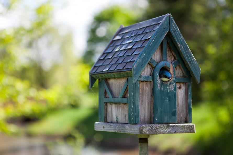 Parc écologique Godefroy -6467