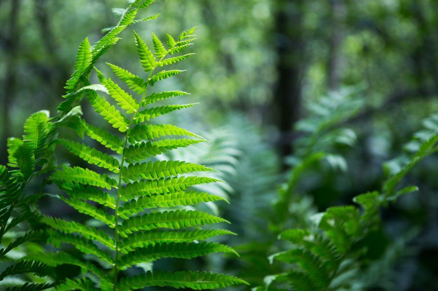 Parc écologique Godefroy -6681